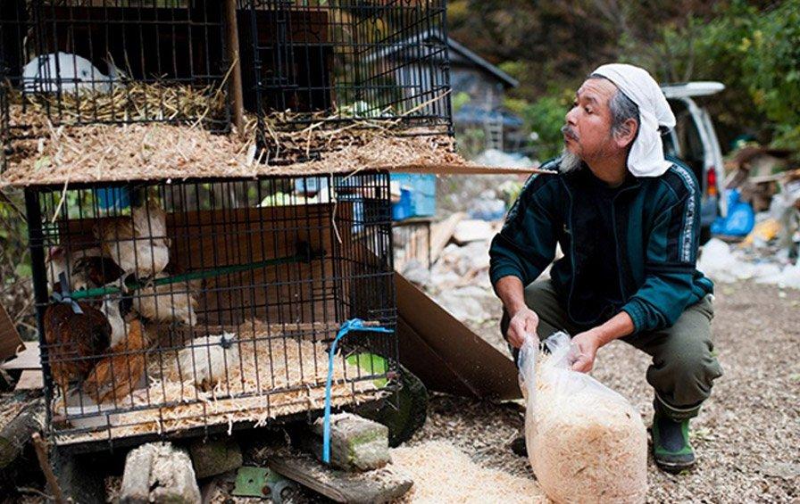 Homem resgata e cuida sozinho de 500 animais abandonados após tsunami