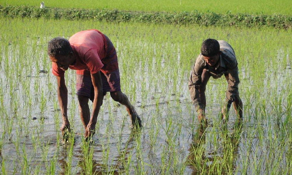 População do Bangladesh aproveita enchentes pra criar agronegócio