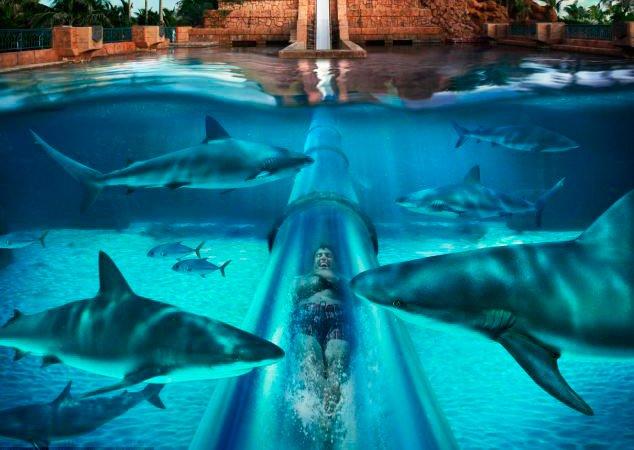 O incrível tobogã transparente construído no meio de um tanque com tubarões