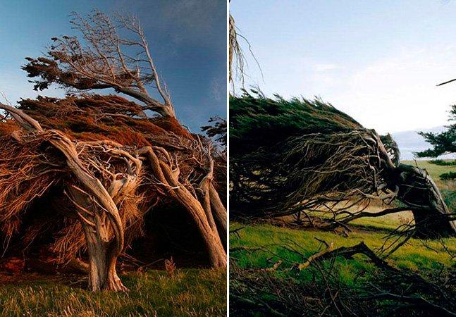 Conheça as belas árvores moldadas pelo vento na Nova Zelândia