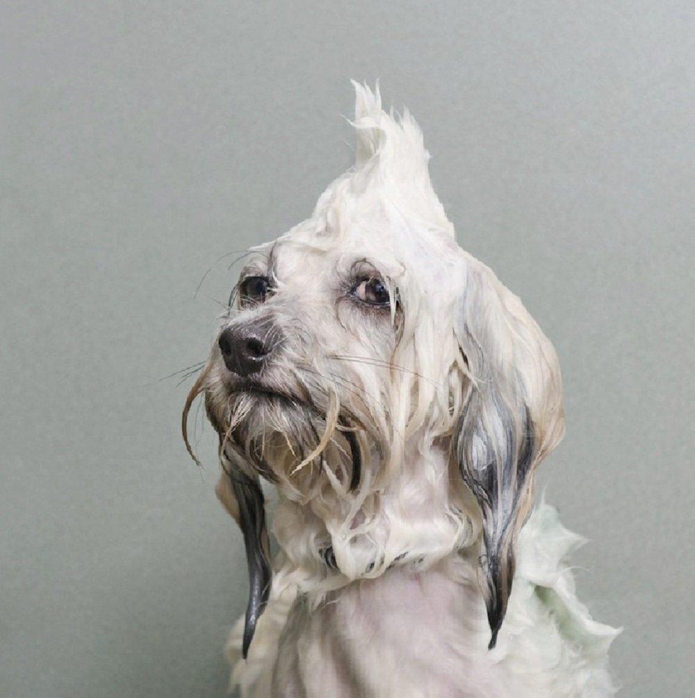 Fotógrafa cria série divertida com cachorros no banho