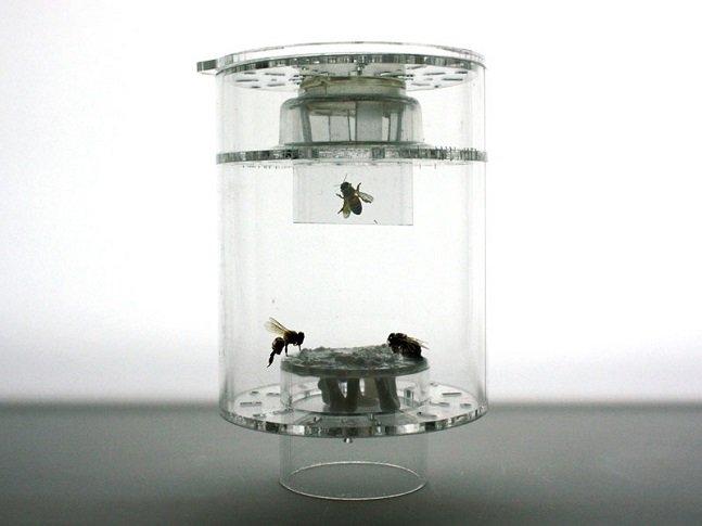 Susana-Soares-Project-Bees-8