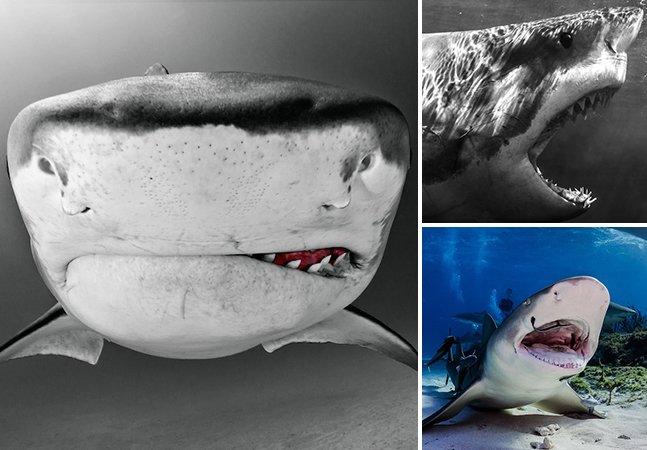 Conheça o trabalho do fotógrafo especializado em clicar tubarões de perto