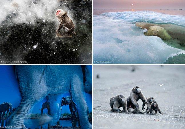 Veja as melhores fotos da vida selvagem em 2013
