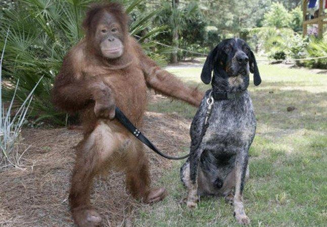 Livro registra a improvável amizade entre um cão e uma macaca