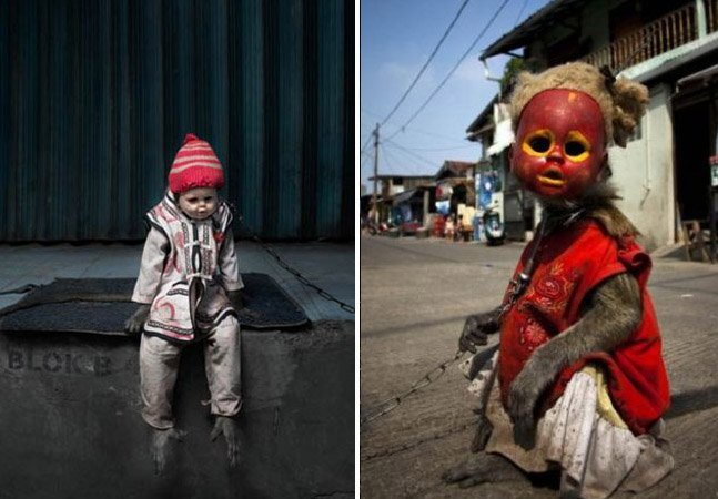Os perturbadores macacos mascarados de pedintes na Indonésia