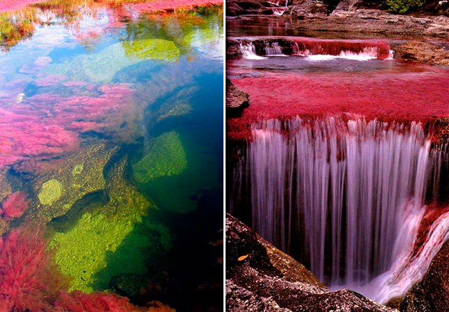 Conheça o incrível rio das cinco cores na Colômbia