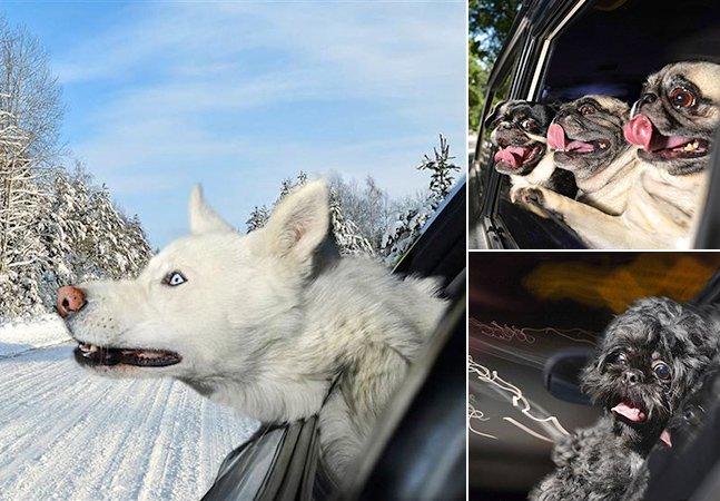 Adorável ensaio fotográfico mostra cães felizes passeando de carro