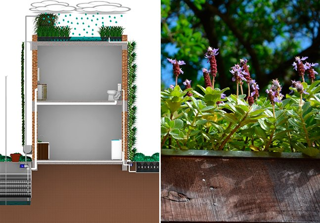 Sistema aproveita resíduos de esgoto pra regar telhados e paredes de edifícios