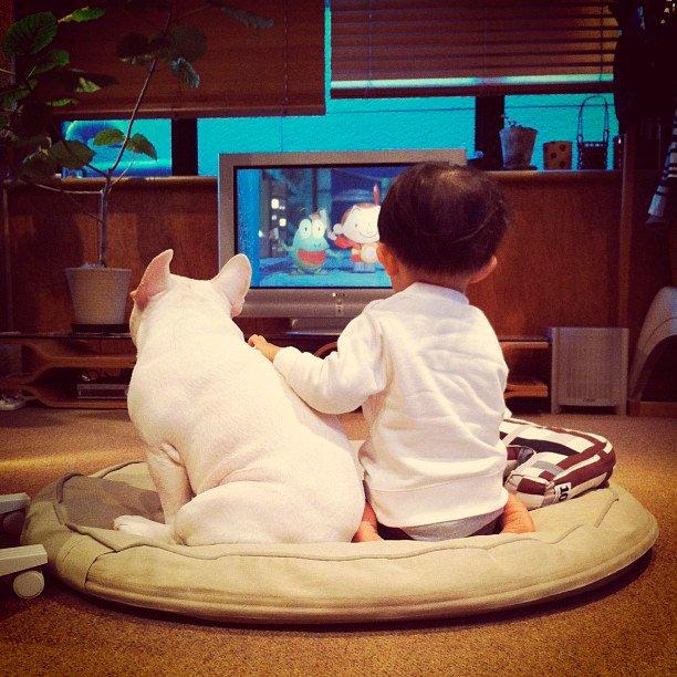 JapanBulldog12