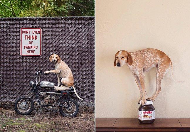 Novas fotos de Maddie, a cachorra mais carismática de todos os tempos