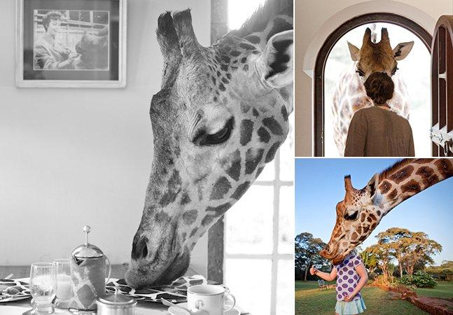 Incríveis imagens de um local onde você pode fazer refeições com girafas