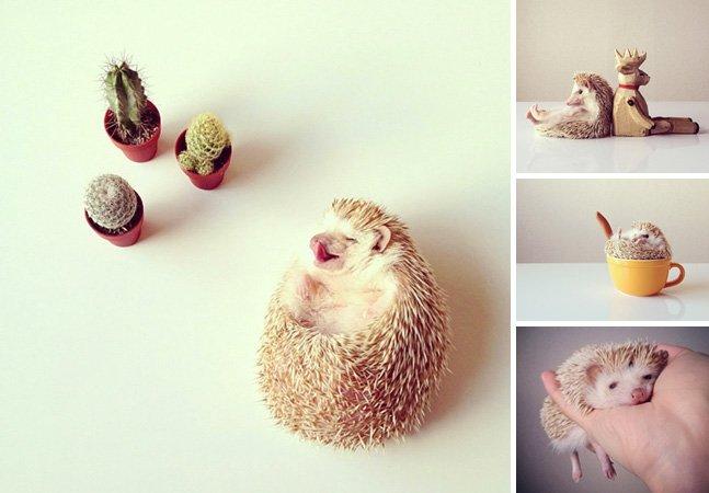 Projeto no Instagram vira febre ao mostrar o dia-a-dia de um ouriço-terrestre