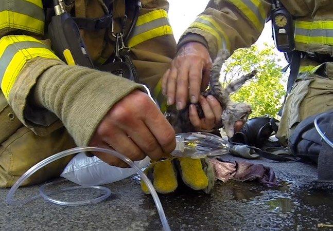 Vídeo tocante de um gatinho sendo resgatado de incêndio se torna viral