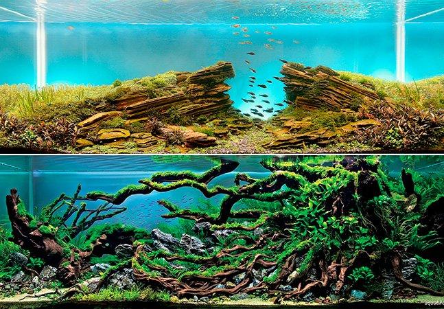 Você não vai acreditar que esses aquários não são paisagens reais