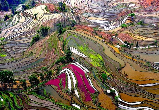 HYPENESS_Passaro_China