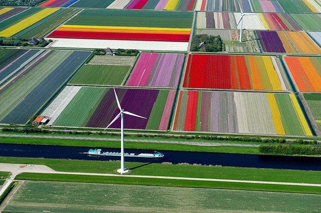 HYPENESS_Passaro_Holanda