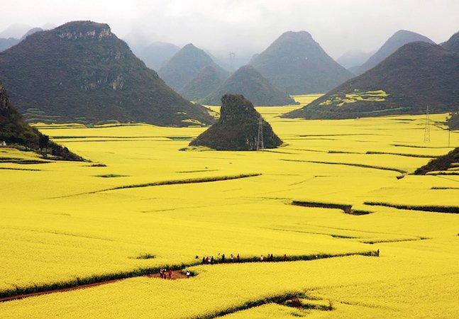 Conheça o espetacular oceano de flores na China