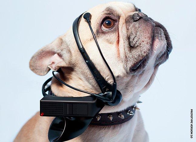 Conheça o gadget que traduz os pensamentos dos cães em palavras