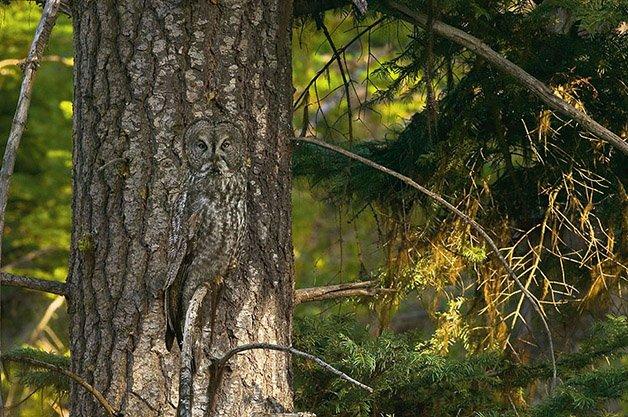 animal-camouflage-1