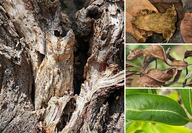 Conheça 20 animais que são mestres em se camuflar na natureza