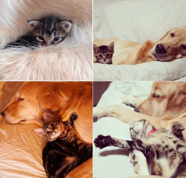 Cão adota gatinho rejeitado pela mãe e o resultado são essas fotos que vão melhorar seu dia