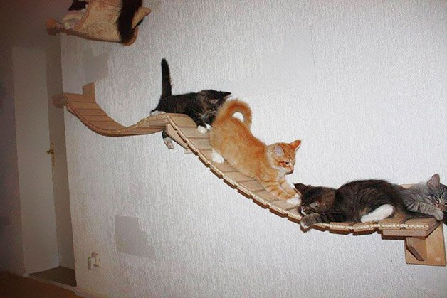 cat-playground-room-goldtatze-8
