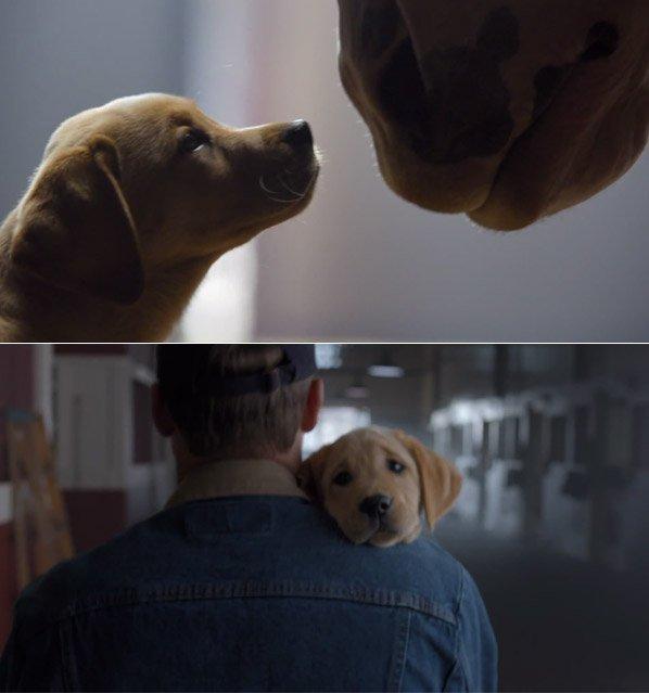 Você não vai resistir à história de amizade entre um cavalo e um cão contada nesse comercial do Super Bowl 2014