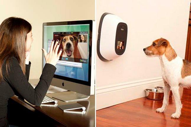 Gadget inovador permite que donos se comuniquem à distância com seus pets