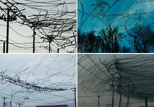 Artista cria incríveis vídeos em timelapse pra mostrar a rota dos pássaros