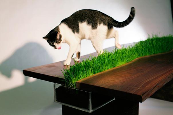 CatFurniture4