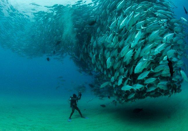 Fotógrafo cruza com tornado de peixes durante mergulho no México e capta imagens de beleza rara