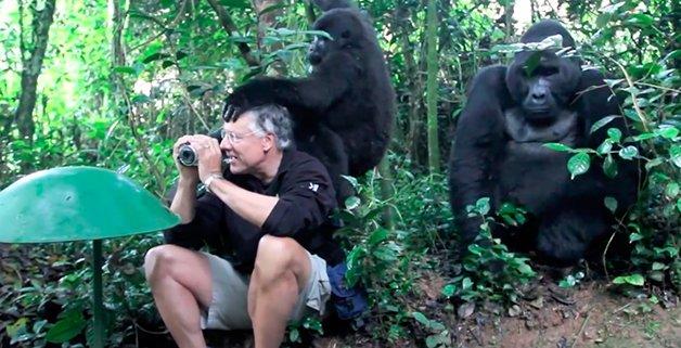 Gorilas3