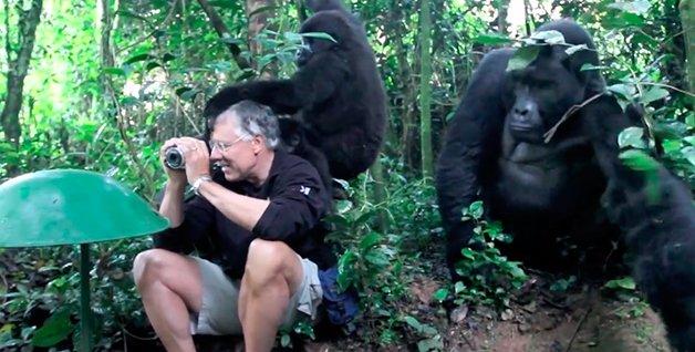 Gorilas4