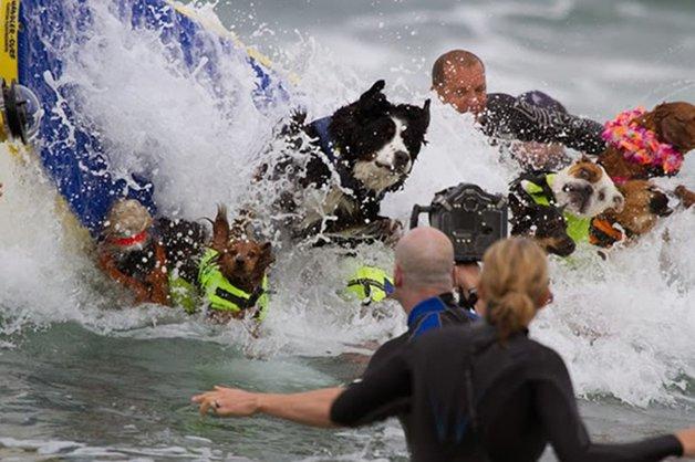 Surf-City-Surf-Dog-surfer-surfing-18