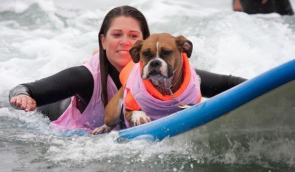 Surf-City-Surf-Dog-surfer-surfing-5