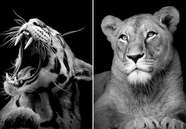 Série fotográfica intensa retrata as expressões de animais selvagens em preto e branco