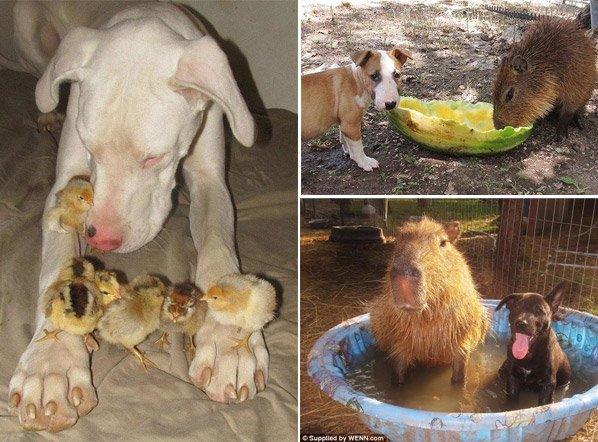 Conheça o abrigo habitado por animais de espécies diferentes que, surpreendentemente, se tornaram amigos