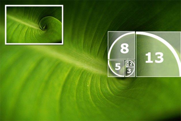 espiral_natureza_fibonacci copy