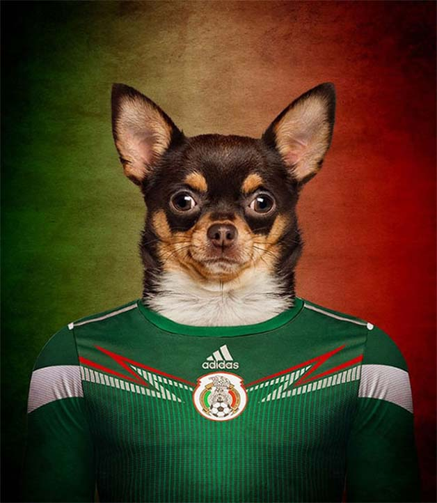 Dogs-of-World-Cup-Brazil-20148-640x736