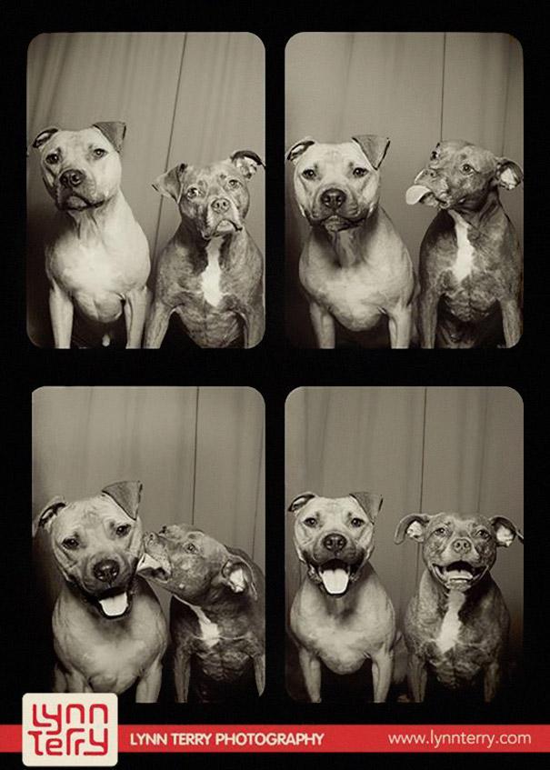 DogsPhotobooth1