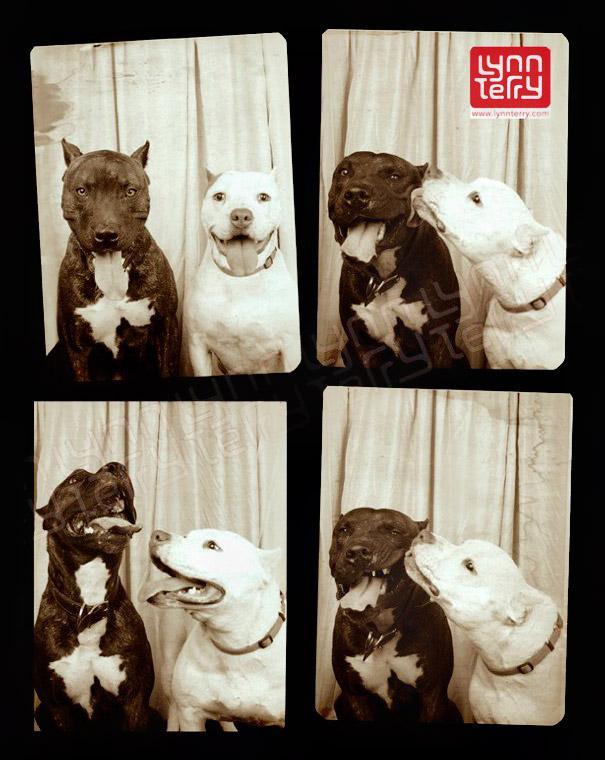 DogsPhotobooth2