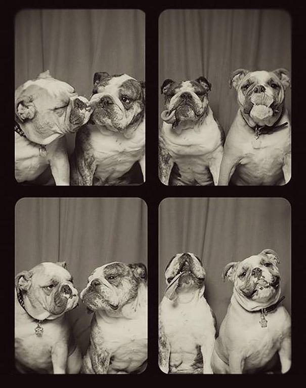DogsPhotobooth4
