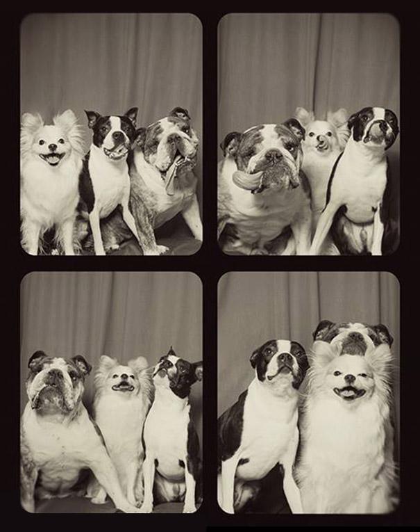DogsPhotobooth5