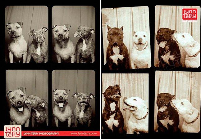 O que acontece quando você coloca cães numa cabine fotográfica