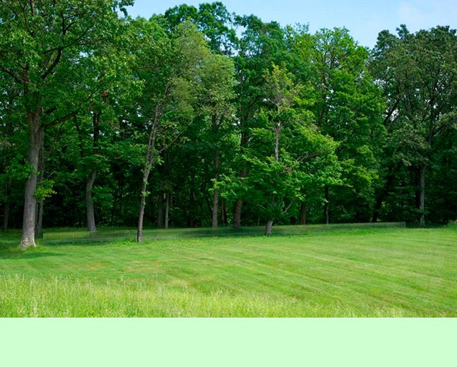 Você consegue enxergar uma cerca nesta foto? É porque ela é realmente brilhante!