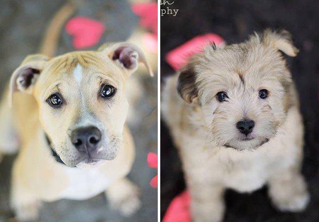 Fotógrafa de 19 anos cria projeto para ajudar cães a serem adotados