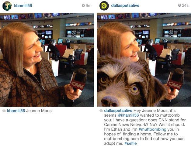Muttbomb ajuda cães a serem adotados