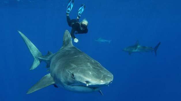 Ocean-Ramsey-Great-White-Shark
