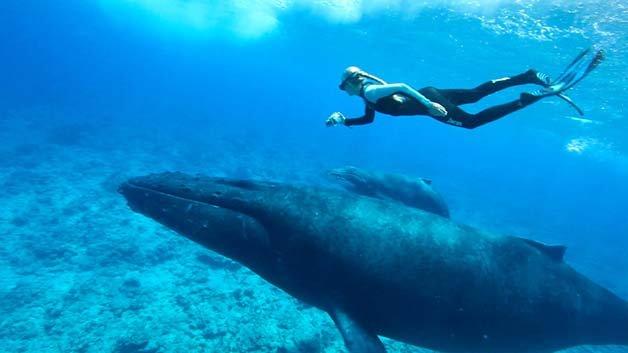 Ocean-Whales-9274